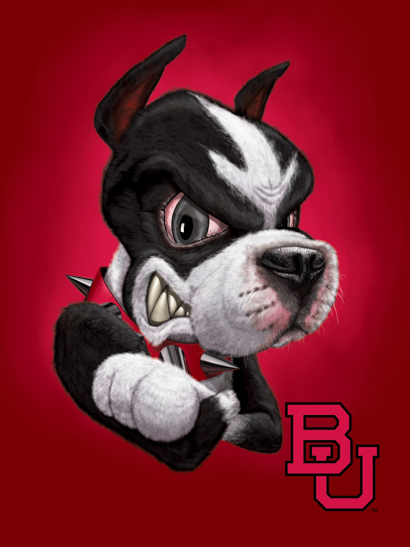 Boston University Terrier