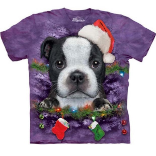 the Mountain Boston terrier Puppy X-Mas