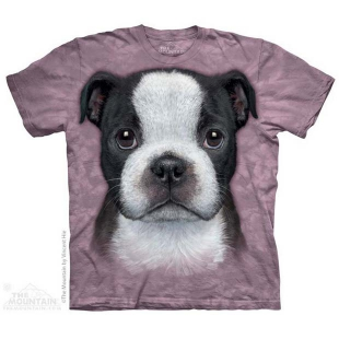 The Mountain Boston terrier Puppy Big Face ®